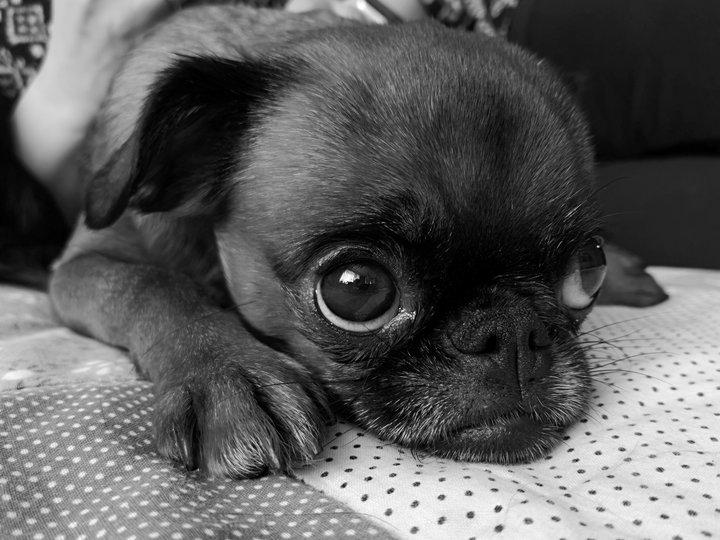 Пример черно-белой фотографии, сделанной на камеру Huawei P20