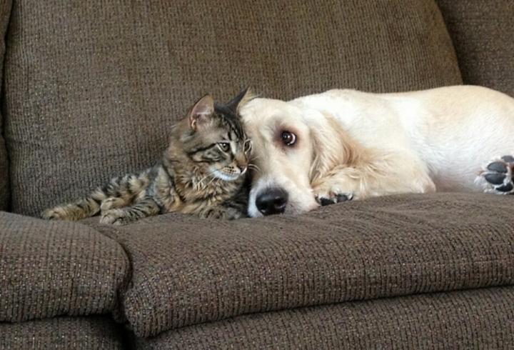 Собака с кошкой на диване