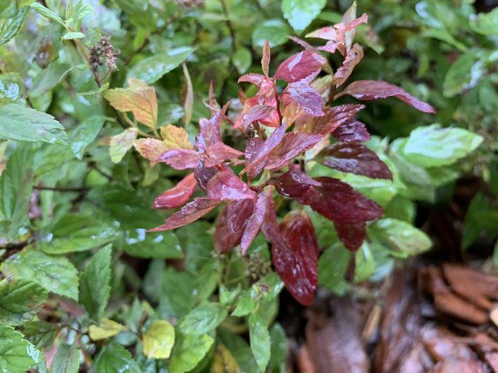 Фото растения на iPhone XR